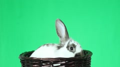 Abbit with long ears Stock Footage
