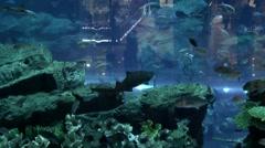 The United Arab Emirates city of Dubai 039 giant aquarium in Dubai Mall Stock Footage