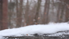 Winter landscape . Snow on  log in  wood  .4K ( 4096x2304). Motorized slider   s Stock Footage