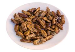 Fried silk worm is the food of the natives Stock Photos