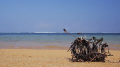 Withered plant and the beach. Stock Footage