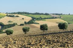 marches (italy): summer landscape - stock photo