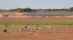 Farmers Working On The Field Stock Footage
