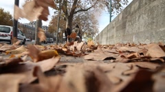 Dry leaves on pavement. Stock Footage
