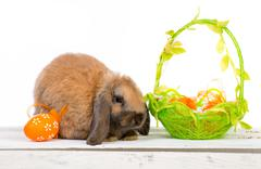 Easter bunny with basket - stock photo
