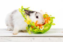 Easter bunny with basket Stock Photos