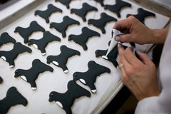 White House pastry chefs decorate cookies shaped like Bo, the Obama Family Do Free Stock Photos