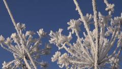 beautiful winter time hoarfrost rime on plants - stock footage