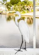 White heron walking on the balustrade of the veranda Stock Photos