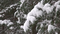 Christmas tree branches, crumbling snow - stock footage