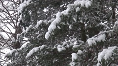 Tree branch covered with a snow. Christmas  background Stock Footage