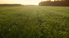 Aerial HD: Wheat Field Swings in the Wind - stock footage