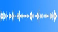 Kids singing nursery song polish Sound Effect