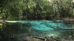Emerald pool in Thailand Stock Footage