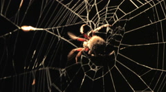 Spider at Night Stock Footage