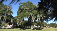 spanish moss waves from live oak trees in park, south carolina, usa - stock footage