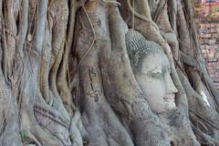 the head of sandstone buddha in tree roots at wat mahathat, ayutthaya, thaila - stock photo