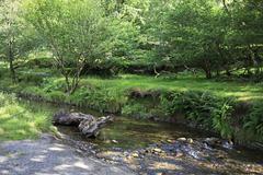Stock Photo of Vegetation on the banks of creek.