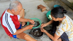 Asia people processing snails for food Stock Footage