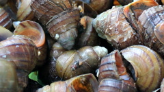 Fly perched on dead snails Stock Footage