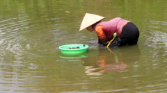 Poor farmer catching snails in the river, Asia Stock Footage