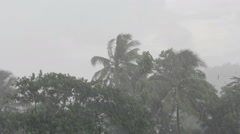 Trees blowing in very high winds and hard rain Stock Footage