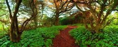 adventure path through the wilderness during the day. photograph was shot at - stock photo