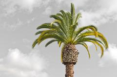 Palm tree with gray sky and white clouds behind it make a beautiful relaxing Stock Photos