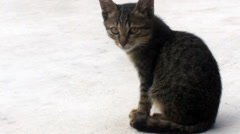 Cat licking fur Stock Footage