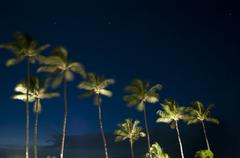tropical palm trees at night underneath the blue sky and stars - stock photo