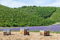 Beehive close to lavander field Stock Photos