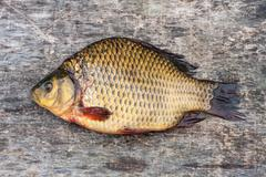 Live freshwater fish carp on a wooden board Stock Photos