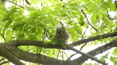 Face of cute owl_134 Stock Footage