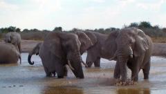 Elephant family bathing Botswana waterhole Stock Footage
