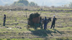 Donkey Cart 4k Video 2 - stock footage