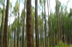 Abstract forest trees, motion blurred with a slow shutter speed Stock Photos