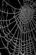 frozen spider web isolated on black - stock illustration