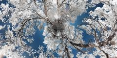 infrared planet with trees - stock photo