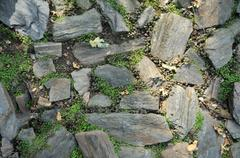 garden stones with grass and tiny clovers growing between the flat masonry ro - stock photo