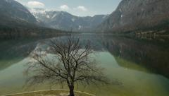Old Leafless oak tree at mountain lake Stock Footage