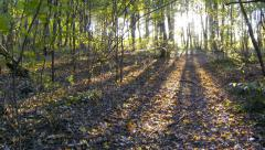 Forest sunset timelapse. Slider cam. Autumn time. Stock Footage