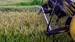 Combine blades harvesting wheat, rice, rye closeup, sony 4k steadycam shoot, Stock Footage