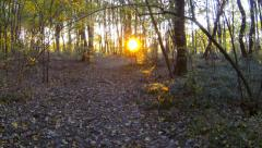 Forest sunset timelapse. Slider cam. Autumn time. - stock footage