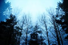 dark moody forest with black trees reaching up towards the sky - stock photo
