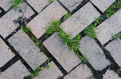 old brick pattern in zigzag design with grass growing in between the cracks - stock photo