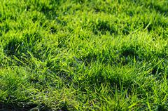 Fresh clean green grass with taken with a shallow depth of field lens Stock Photos