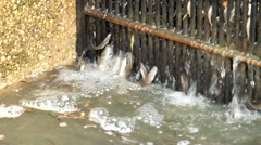 Dirty stream, water with plenty of small fishes, bubbles. Dying of fishes. Stock Footage