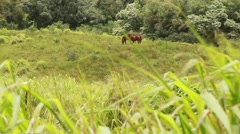 Horses in BG Stock Footage