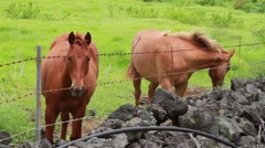 Horses behind fence Stock Footage