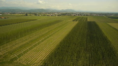 Aerial Top Shoot Over Hop Field Stock Footage